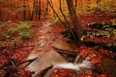 A Stream Flowing Through a Forest on an Autumn Day Near the New York/Vermont Border
