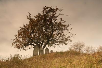 An Old Cemetery Near Cambridge, New York