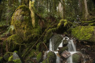 Stream Running Through a Mossy Forest, Feeding into the North Umpqua River
