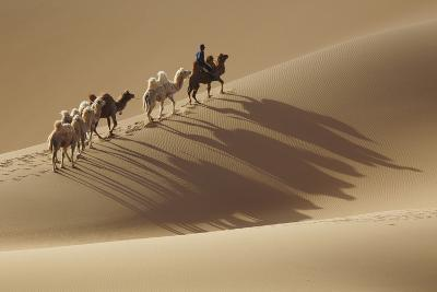 Camel caravan, Badain Jaran Desert, Inner Mongolia, China.