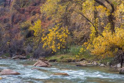 The Virgin River in autumn in Zion National Park, Utah, USA