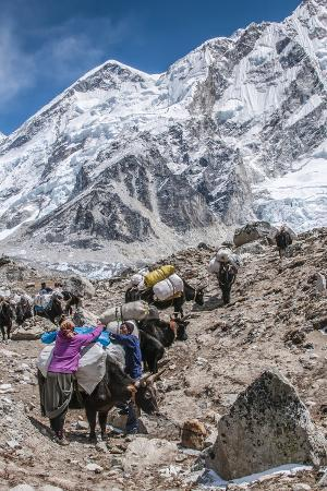 Yaks and herders on a trail to Everest Base Camp.