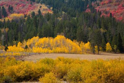 Meadow in Rocky Mountains in autumn.