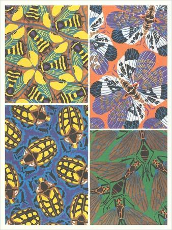 Insect Patterns