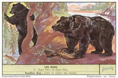 Black and Gray Bears