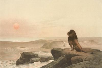 Lion Watching Sunset