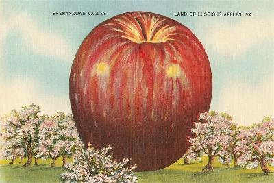Giant Apple, Shenandoah Valley