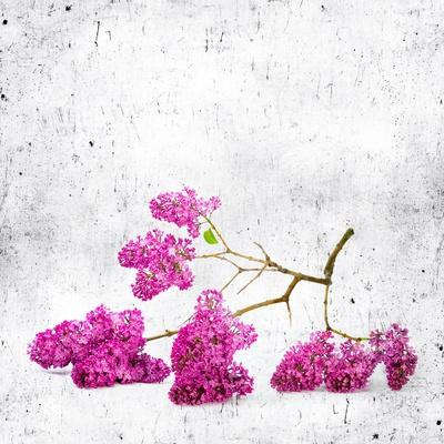 Blue Background with Lilac Flowers