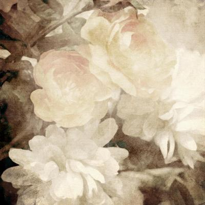 Art Floral Vintage Sepia Blurred Background with White Asters and Roses
