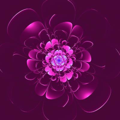 Beautiful Purple Flower on Purple Background