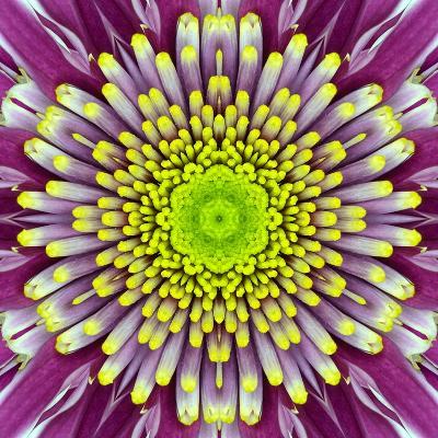 Purple Concentric Flower Center: Mandala Kaleidoscopic