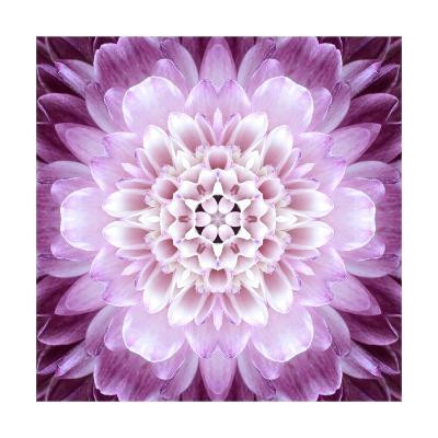 Pink Concentric Flower Center