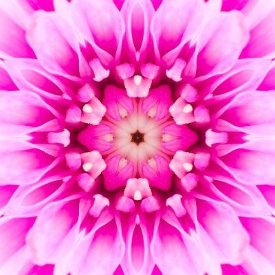 Pink Concentric Flower Center: Mandala Kaleidoscopic