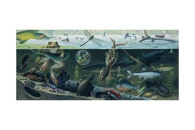 An Illustration of Freshwater Pond Life