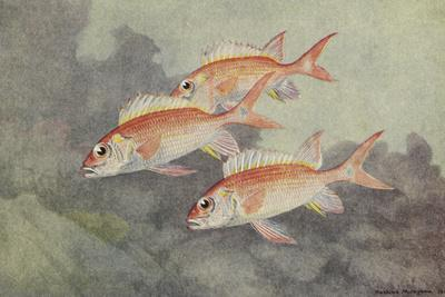 A Painting of Three, Colorful Squirrelfish