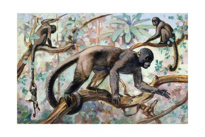Painting of Wooly Monkeys in a Forest Setting