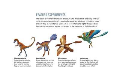 Feathers of Nonavian Dinosaurs and Early Birds