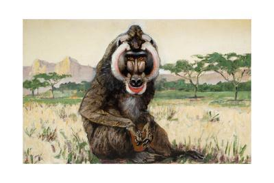 Painting of a Male Mandrill, Papio Sphinx
