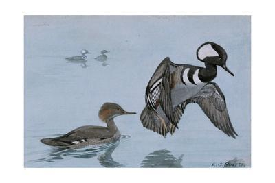 A Painting of a Male and a Female Hooded Merganser