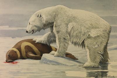 A Polar Bear Feeds on a Ribbon Seal