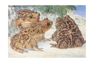 A View of the Patterned Cuban Toads