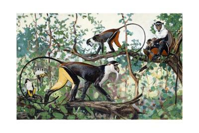 Painting of Diana and Roloway Monkeys in a Treetop Setting