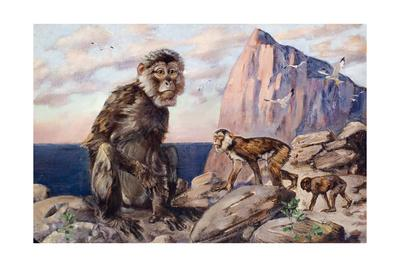 Painting of Barbary Apes, or Macaques, in a Rock of Gibraltar Setting
