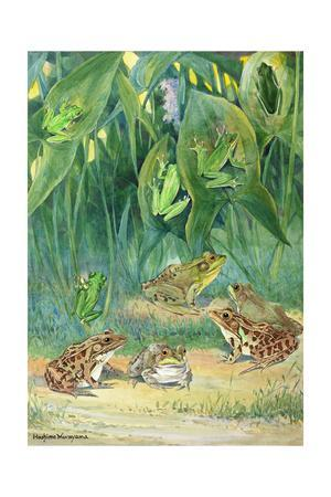 A Variety of Tree and Meadow Frogs Await Low Flying Insects