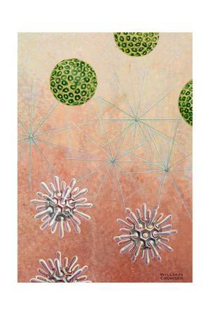 Plankton Halosphaera, Top, Chaetoceras, and Rhabdosphaera, Bottom