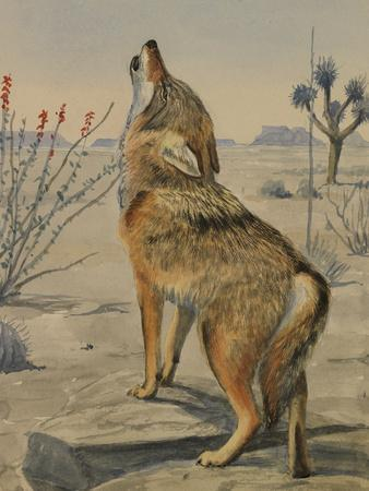 A Painting of a Howling Arizona, or Mearns, Coyote