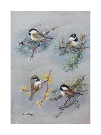 A Painting of Several Species of Chickadee