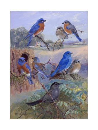 A Painting of Three Species of Bluebird and a Catbird