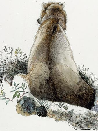 Illustration of a Grizzly Bear in the Arctic National Wildlife Refuge