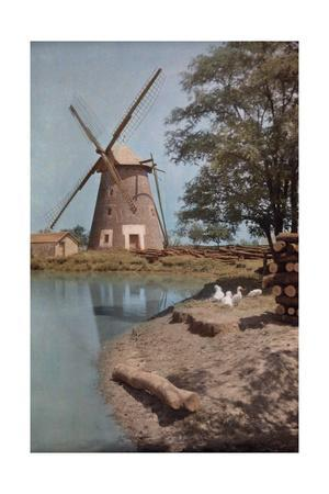 A Windmill Sits Beside a Pond in the Lowlands; Ducks Rest Nearby