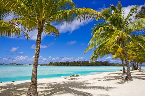 Palm Trees, Lounge Chairs, And White Sand On A Tropical