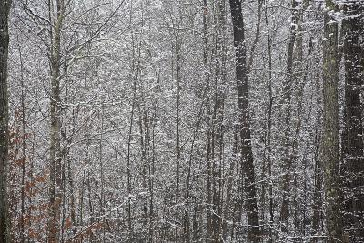 An Early Autumn Snowfall Hangs on Trees in a Forest