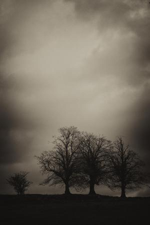 A Cluster of Trees Stand under a Cloudy Sky