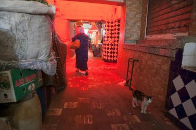 Inside a Moroccan Marketplace, a Woman Passes a Cat While Carrying Groceries