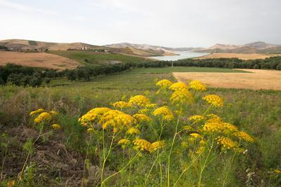 Pristine Nature, Fields, Flowers and Lake Sade Sidi Echahade are Visible in the Rural Outskirts of