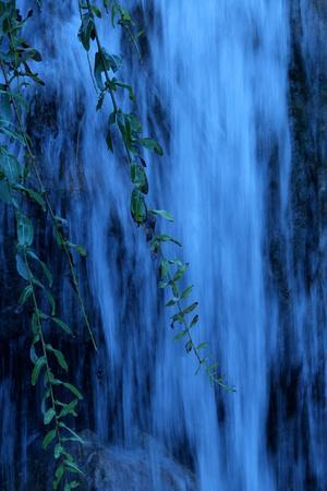 Water Rushes over a Waterfall with Branches of a Weeping Willow Tree in the Foreground