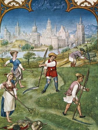 The Month of June, Haymaking, Miniature from the Grimani Breviary, Folio 6, Verso, Flanders