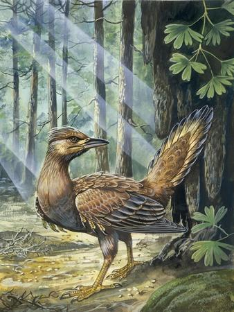 Reconstruction, Long-Tailed, Seed-Eating Bird Fossil