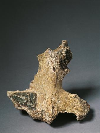 Caves of the Balzi Rossi, Barma Grande Cave: Triple Burial, Cro-Magnon Type Skeleton Detail