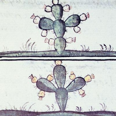 Artwork Depicting a Cactus