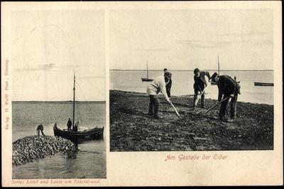 Tönning, Land Und Leute Am Eiderstrand, Boot