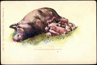 Schweinemutter Mit Ferkel, Still, Fulfilling Family Obligations