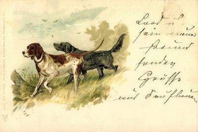Künstler Litho Hunde, Braun Weiß Gefleckt, Dunkel, Vogeljagd