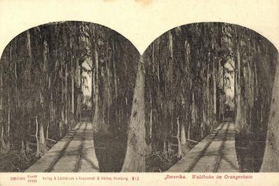Stereo Blick Auf Eine Waldbahn Im Orangenhain
