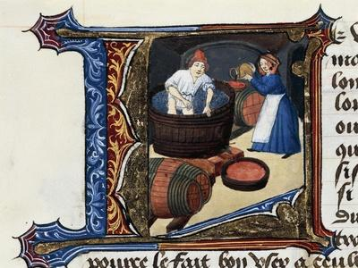 Wine and the Pressing of Grapes, Miniature from the Treaty of Medicine Aldebrande of Florence, 1356
