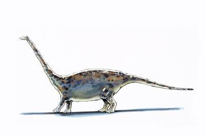 Illustration of Barapasaurus - Artwork
